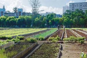 Urban farming in Cuba is big and growing