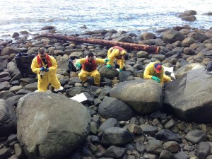 Crews clean oil off shoreline of Stanley Park in Vancouver (Meera Bains, CBC News on Twitter)